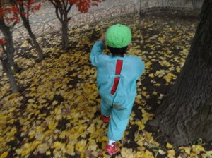 落ち葉散歩